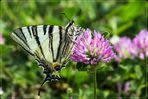 Welchen hübschen Schmetterling habe ich hier erwischt???