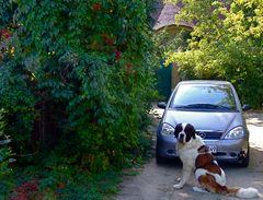 °°° Welcher Hund hat da an Frauchen's Auto getapst ? °°°