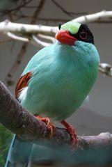 Welcher Vogel ist das?