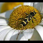 Welches Insekt bin ich?