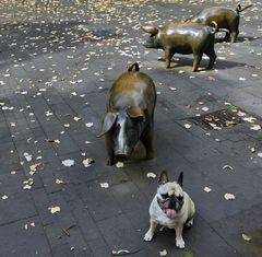 Welches Schweinderl hättens denn gern