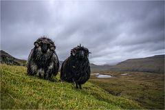 Welcome at Faroe Islands...