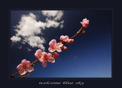 Welcome blue sky