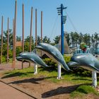 Welcome dolphin in Jeju