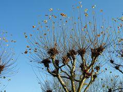»Welke Blätter« - 10 (YT MW 2015.05.12)