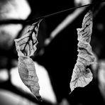 Welke Blätter #2
