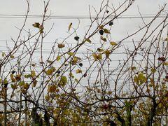 »Welke Blätter« - 31 (YT MW 2015.05.12)