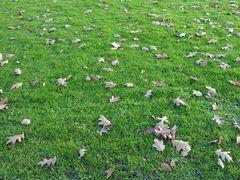 »Welke Blätter« - 46 (YT MW 2015.05.12)