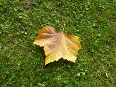 »Welke Blätter« - 48 (YT MW 2015.05.12)