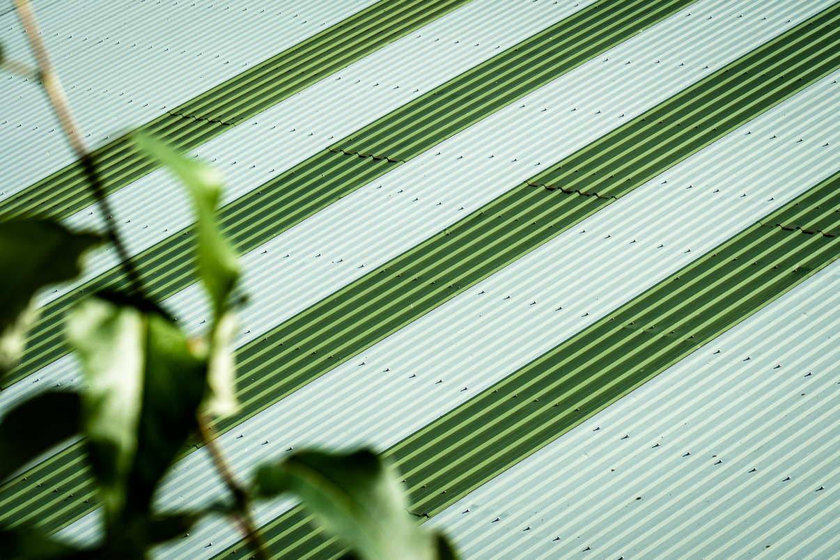 Wellblechdach in grün