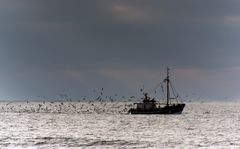 Wellen - Möwen - Seeluft