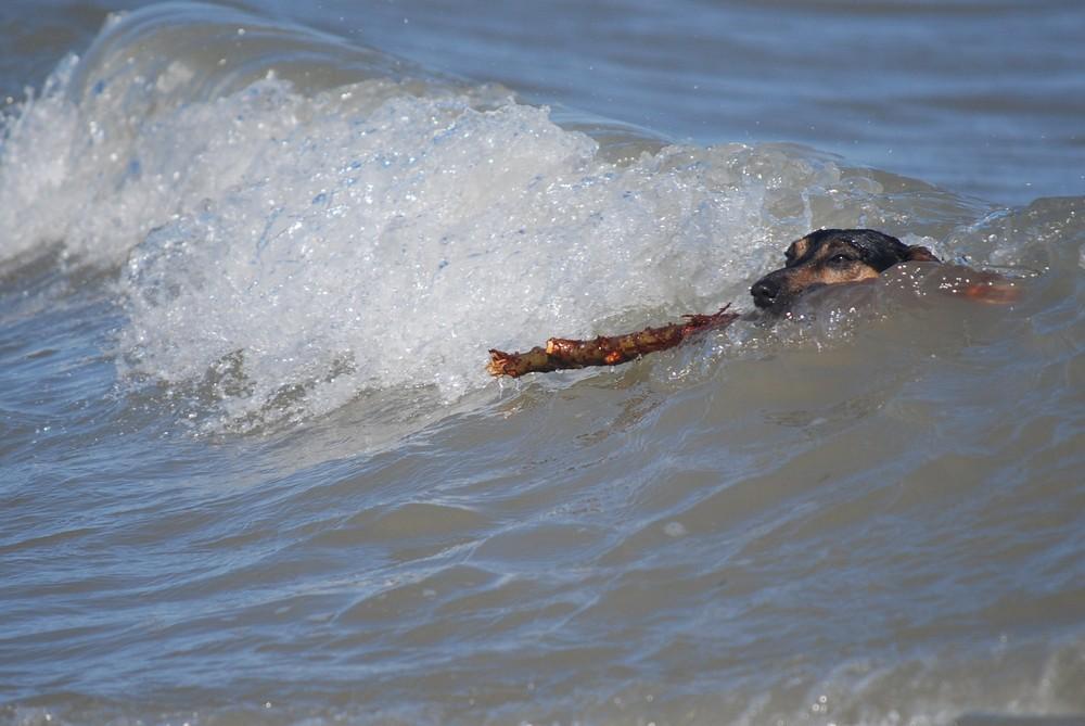 Wellenreiten. . .