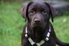 Welpenzuwachs bei Hundesache