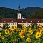 """Welt-ältestes Zisterzienserkloster """"Stift Rein"""" - eingebettet in einem Sonnenblumenmeer"""