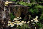 Welt der Pilze