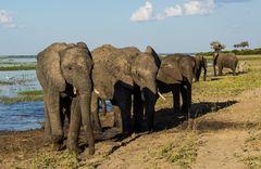 Welt Elefanten Tag