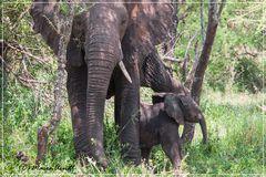 Welttag der Elefanten