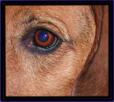 Wem gehört dieses Auge?