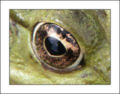 Wem gehört dieses schöne Auge?