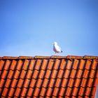 Wenig Zutaten: Möwe, Dach und Himmel- sonst nichts.