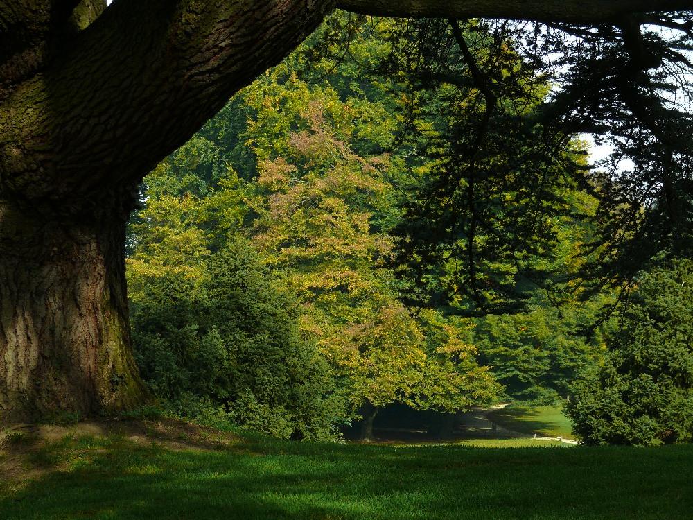 Wenkenhof - Park