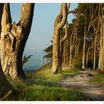 Wenn Bäume dem Meer lauschen...