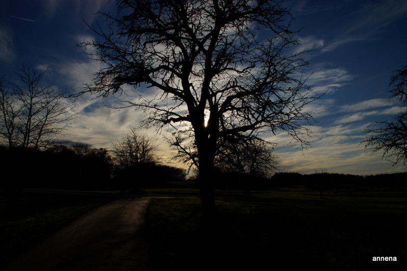 wenn Bäume in den Himmel wachsen.......