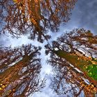Wenn Bäume in den Himmel wachsen...