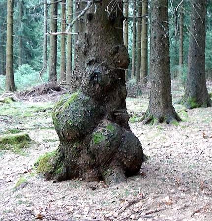 Wenn Bäume sprechen könnten 2