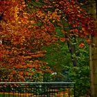 Wenn Blätter bunt sich färben