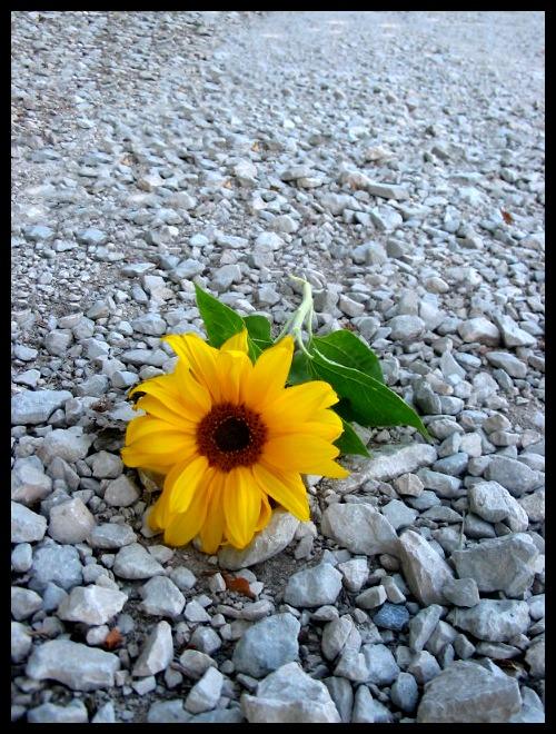 *wenn Blumen sprechen könnten...*