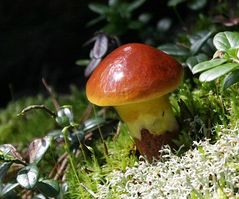 wenn das Jahr zur Neige geht - Pilzzeit