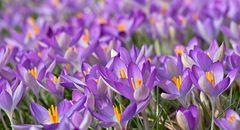 Wenn das kein Frühling ist...