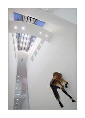 [ Wenn das Pferd mit dem Kopf durch die Wand will... ]