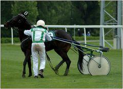 ... wenn das Pferd nicht will ...