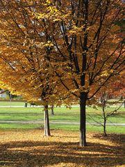 ... wenn der Herbst am Boden liegt.....