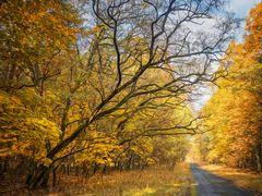 wenn der Herbst kommt
