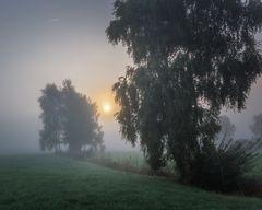 Wenn der Nebel flieht