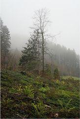 Wenn der Nebel in den Zweigen hängt - 1