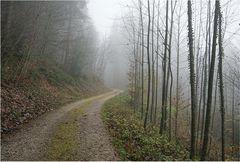 Wenn der Nebel in den Zweigen hängt - 2
