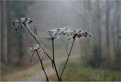 Wenn der Nebel in den Zweigen hängt - 3