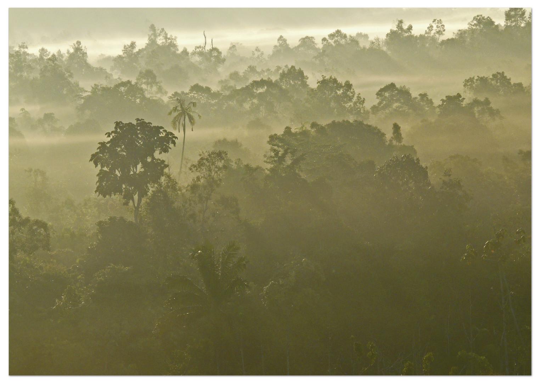 Wenn der Regenwald dampft..