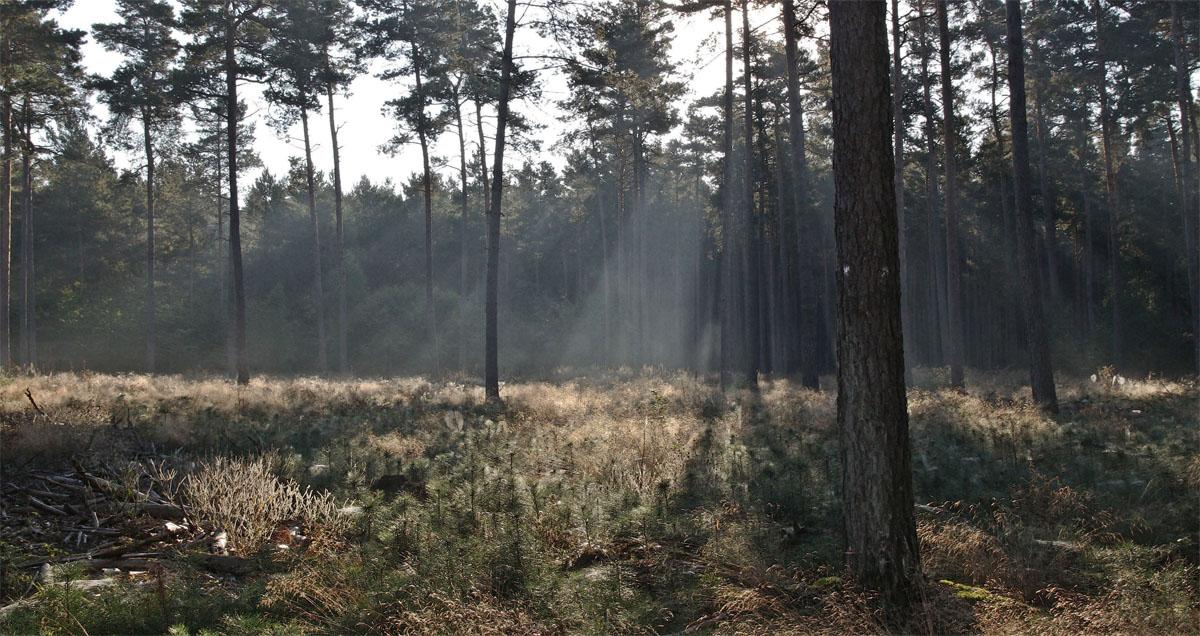 Wenn der Wald erwacht