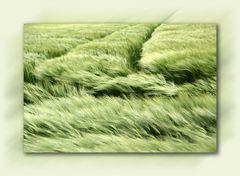 ,,,wenn der Wind im Getreide sein Lied singt.