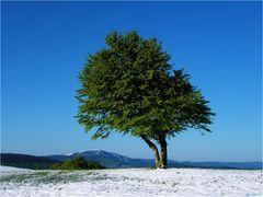 Wenn der Winter sich in den Sommer verliebt hat #6