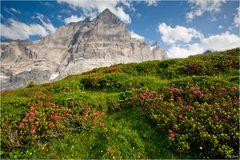 Bern/Berner Oberland