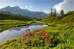 Wenn die Alpen blühen II