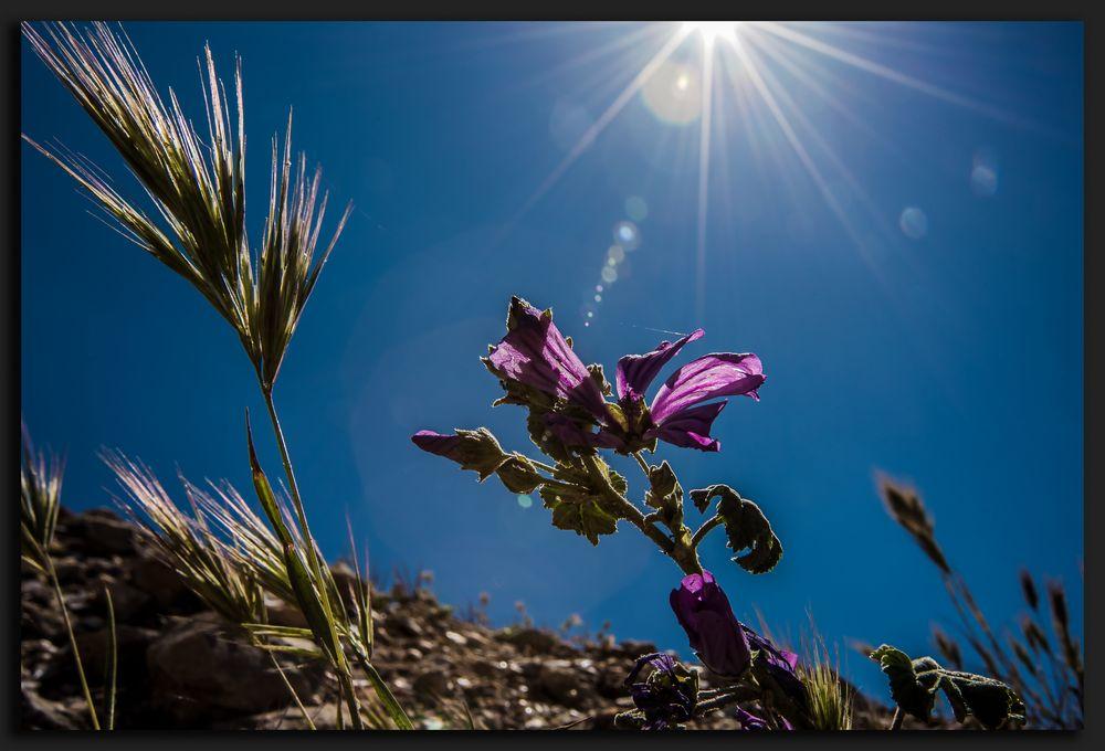 Wenn die Ameise zum Himmel schaut...