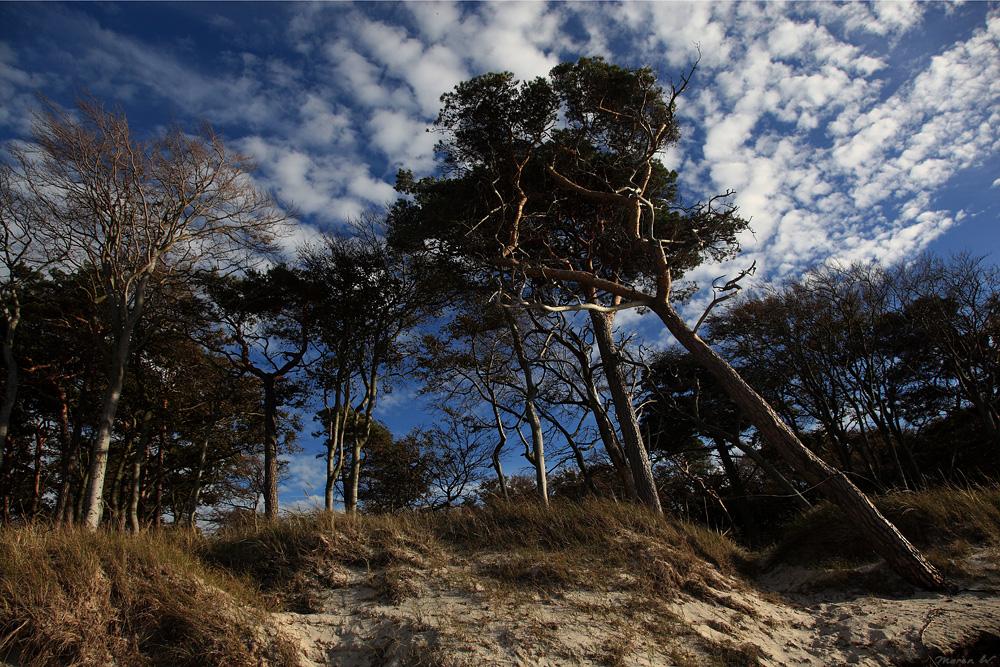 Wenn die Bäume am Meer wohnen....