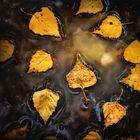 Wenn die ersten Blätter fallen